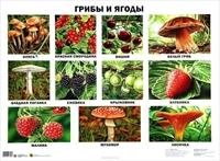 Плакат Грибы и ягоды