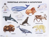 Плакат Животные Арктики и Антарктики