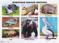 Плакат Животные Южной Америки