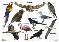 Плакат Птицы